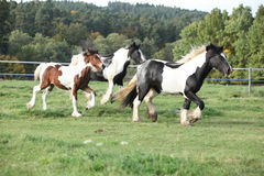 Group of horses running on pasturage Stock Photo