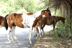 Group of horses standing under shade Stock Images