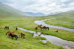 Group of horses on summe pasturage. In mountains Royalty Free Stock Image