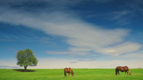 Group of horses in the summer pasture stock video footage
