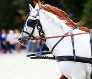 Group of horses towing a carriage summertime Stock Images