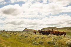 A group of horses in a valley. With rock formations in the background and a fence line in front and a cloudy sky Stock Photos