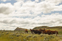 A group of horses in a valley. A group of horses standing by a fence with a cloudy sky in a valley in saskatchewan Royalty Free Stock Images