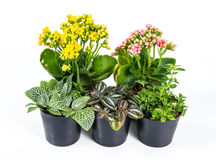 Group of house plants on white background. royalty free stock image