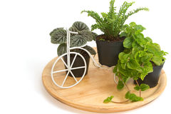 Group of house plants in a wooden tray Stock Photo