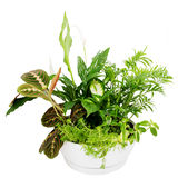 Group houseplants. Royalty Free Stock Photo