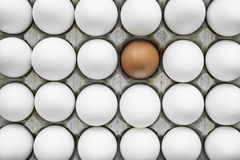 Group of identical chicken eggs except one Stock Image