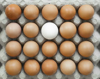 Group of identical chicken eggs except one Royalty Free Stock Photography
