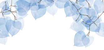 Group of isolated tree branches with blue leaves Royalty Free Stock Photos