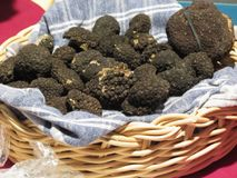 Group of italian expensive black truffles on the traditional canvas Stock Photos