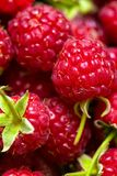 Raspberries. Group of juicy raspberries close up shot royalty free stock photography