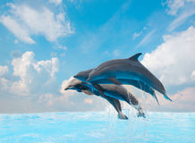 Group of jumping dolphins Stock Photo