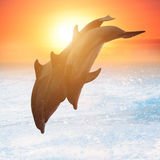 Group of jumping dolphins Stock Photos
