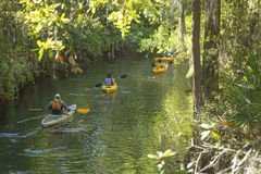 Group of kayakers on Shingle Creek in Kissimmee, Florida. Royalty Free Stock Photo