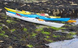 Group of Kayaks on Seaweed-Covered Rocks Royalty Free Stock Photo