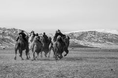 Camel race competition during the Golden Eagle Festival held in the winter in Ulgi Mongolia. A group of kids racing in a camel running competition during the Stock Image