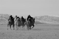 Camel race competition during the Golden Eagle Festival held in the winter in Ulgi Mongolia. A group of kids racing in a camel running competition during the Stock Photo