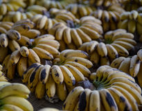 The group of Kind of Banana or Pisang Mas Royalty Free Stock Photo