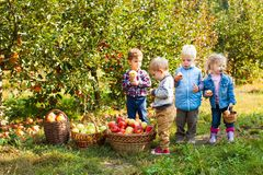 Group of kindergarten kids helping to pick apples stock photo