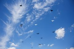 Group of kites in the blue sky Royalty Free Stock Image