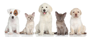 Group of kitten and puppies Stock Image