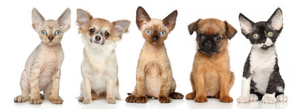 Group of kitten and puppies on a white background Royalty Free Stock Photography