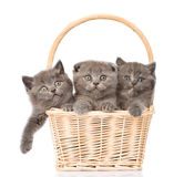 Group kittens in basket looking at camera. isolated Royalty Free Stock Photo