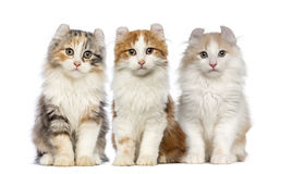 Group of Kittens. Isolated on white Royalty Free Stock Photo