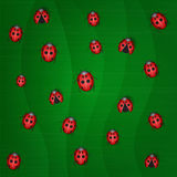 Group ladybug Royalty Free Stock Photo