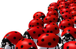 Group of ladybugs Royalty Free Stock Photo