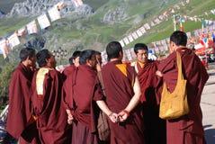 A group of Lamas Royalty Free Stock Photo