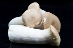 A group of large king oyster mushrooms. Stock Image