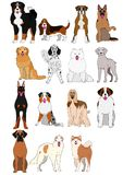 Group of large and middle dogs breeds hand drawn chart. Group of large and middle dogs breeds hand drawn vector illustration