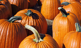 Group of large pumpkins Stock Images