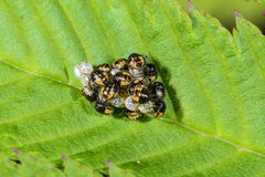 Group of larvae Stock Image