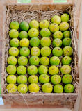Group of lime in box royalty free stock images