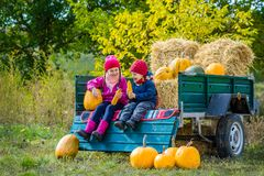 Group of little children enjoying harvest festival celebration at pumpkin patch. Kids picking and carving pumpkins at country farm on warm autumn day royalty free stock photo