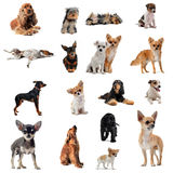 Group of little dogs Stock Photo