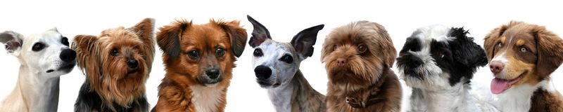 Border with portraits of little dogs royalty free stock photography