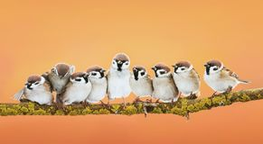 Group of little funny birds sitting in a bright Sunny spring Par stock photos