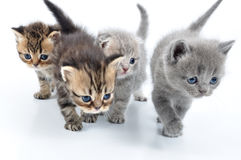 Group of little kittens. Group of small 3 weeks old kittens walking towards Stock Photos