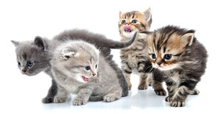 Group of little kittens Stock Images