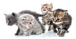 Group of little kittens Stock Images