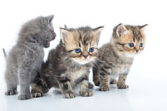 Group of little kittens Royalty Free Stock Images