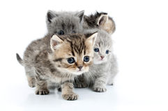 Little  kittens Royalty Free Stock Image