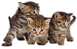 Group of little kittens on white Stock Image