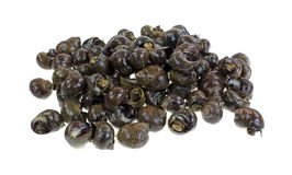 Group of live periwinkles Stock Photo
