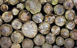 Group Of Logs Royalty Free Stock Photos