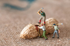 Group of lumbermen trying to open a peanut Royalty Free Stock Images