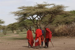 A group maasai men under tree divide money. Stock Image